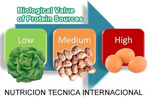 home-course-study-nutricion-internacional-propta_